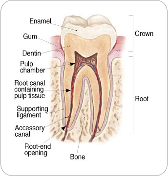 Endodontic Treatment | Strongsville, OH Endodontist | Dentkos Endodontics